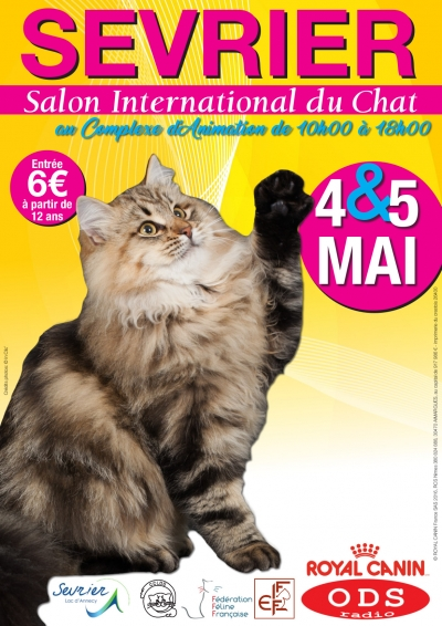 Le chat sera à l'honneur en mai ! Exposition féline internationale